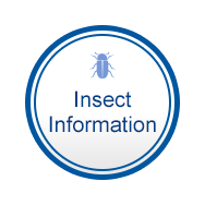 Insect Information